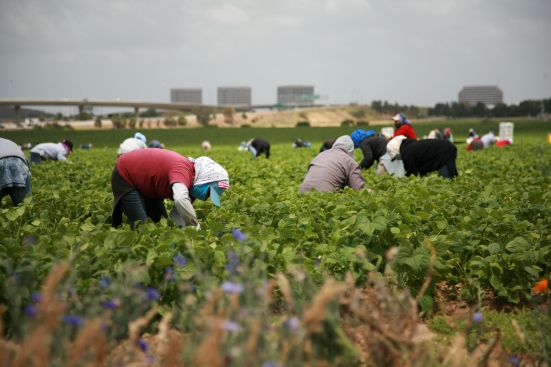 migrant-farmworkers